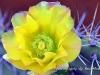 cactusbloemcuracao