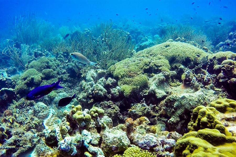 Duikje meepakken op Curacao