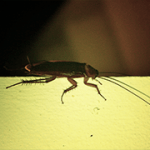 De 5 meest irritante beesten in je tuin op Curacao