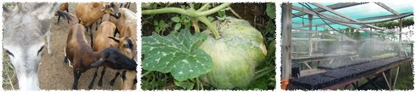 finca-del-sol-curacao-boerderij-tuinbouw