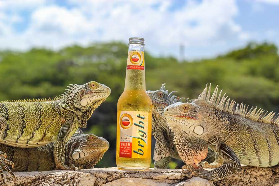 Leguanen fotograferen bij Lagun in Curacao