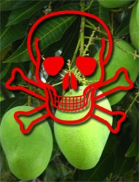 The Infamous Mango