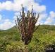 kadushi-curacao-cactus-4
