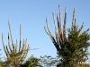 kadushi-curacao-cactus-6