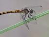 libelle-curacao-04