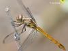 libelle-curacao-05