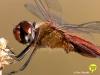 libelle-curacao-06