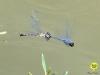 libelle-curacao-11