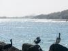 jan-thiel-beach-curacao-01