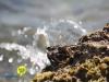 jan-thiel-beach-curacao-04
