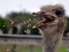 struisvogel-farm-curacao-01