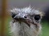 struisvogel-farm-curacao-05