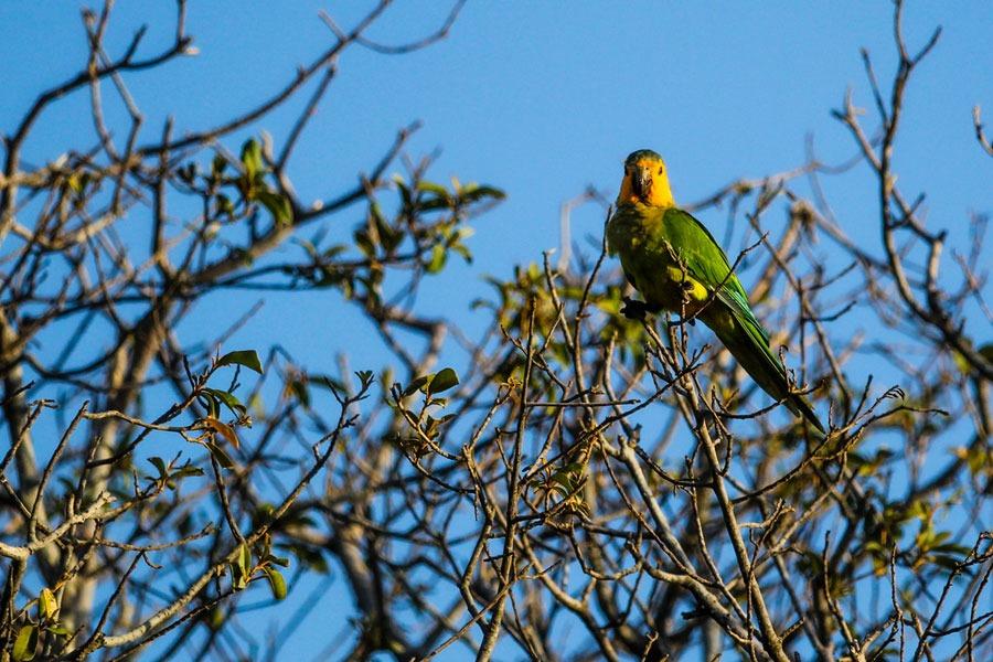5 coolste dieren in je tuin op Curacao
