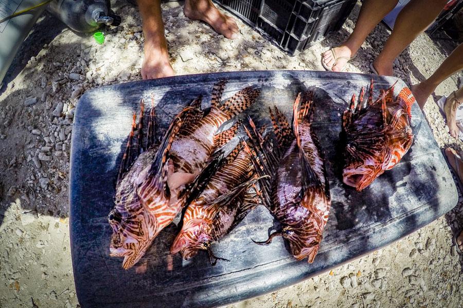 Lionfish CUracao