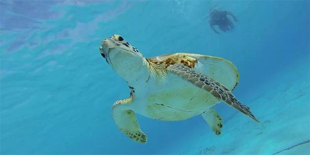 Snorkelen met schildpad op Curacao